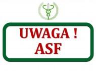 ASF – Afrykański Pomór Świń