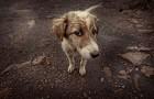 Projekt programu opieki nadzwierzętami bezdomnymi w2020r.
