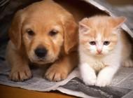 Program opieki nadzwierzętami
