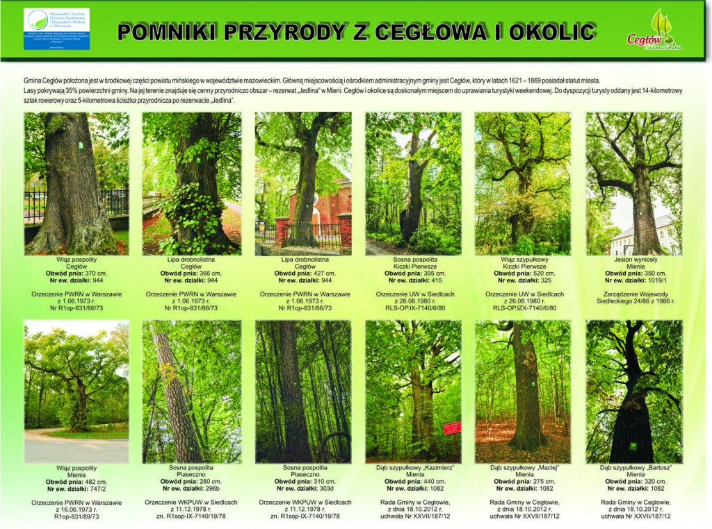 pomniki_przyrody_1