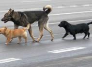 Zdarzenia drogowe zudziałem zwierząt