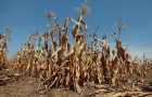 Pomoc dla rolników poszkodowanych przez suszę